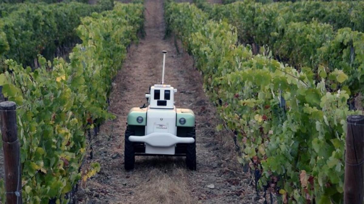 Imagen de un robot inventado en València para cuidar los viñedos.