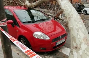 El árbol ha caído sobre tres turismos de la calle de l'Estronci, l'Hospitalet