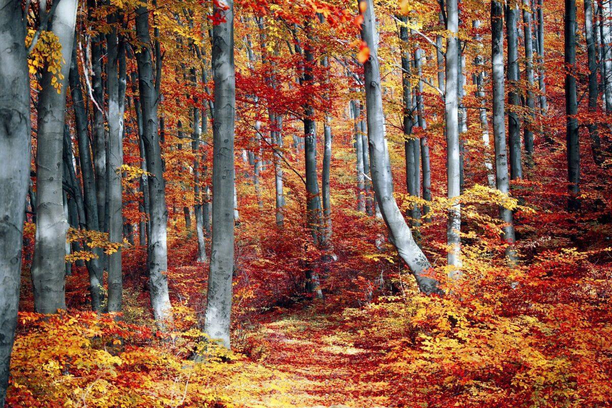 Plantar 3.000 millones de árboles hasta 2030, objetivo prioritario de la Unión Europea