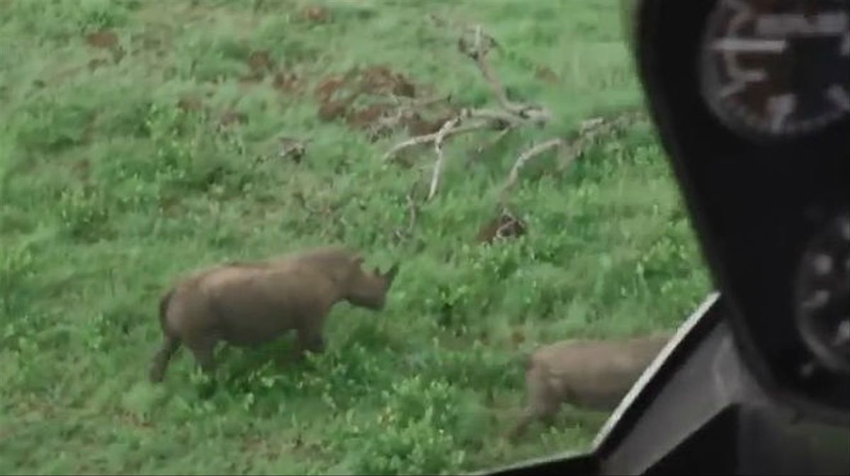 El proyecto 'Ranger Drone' para evitar la caza furtiva de rinocerontes
