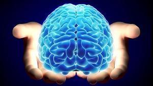 Las matemáticas del cerebroson clave en la toma de decisiones, según apunta un nuevo estudio