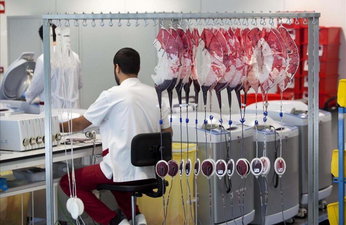 Un sanitario en un banco de sangre de Catalunya.