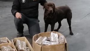 El agente canino de la Guardia Civil Turko localizó 82 kilos de hachís en noviembre.