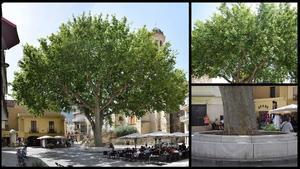 El árbol de la libertad de Llançà, en el Alt Empordà.