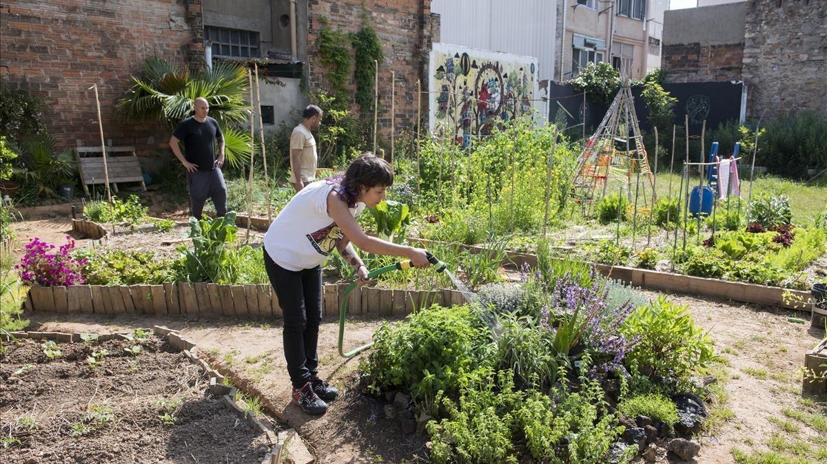 Un grupo de usuarios de ConnectHort colaboran en el mantenimiento de plantas y vegetales