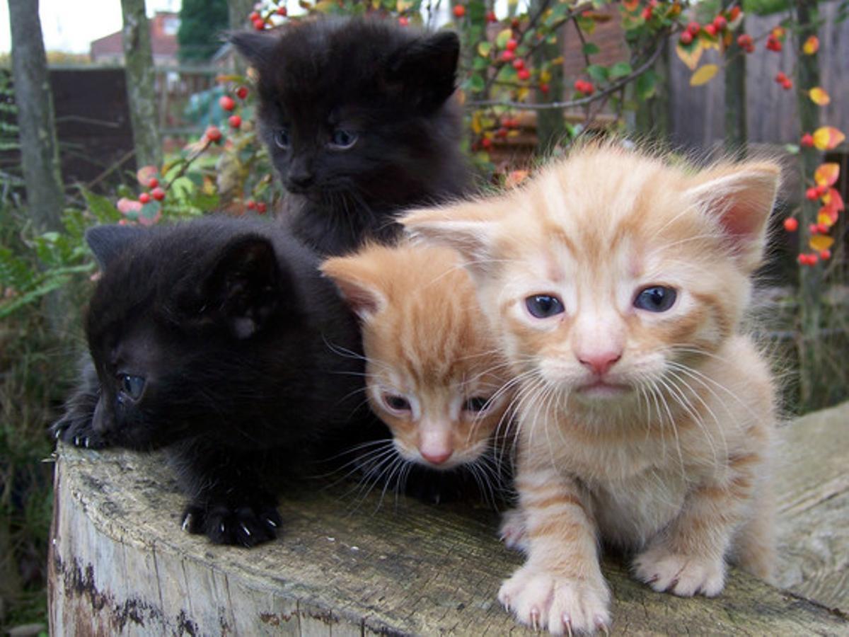 Nace la primera cafetería para gatos en Barcelona