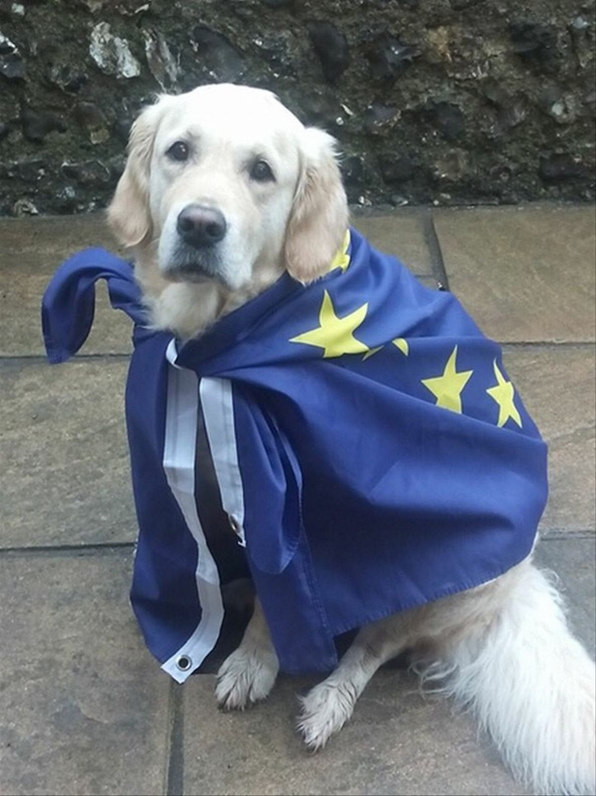 Fotografía de un perro en un colegio electoral en el Reino Unido.