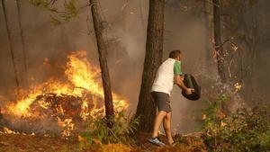 Calor, sequera i eucaliptus, un còctel perfecte per al foc
