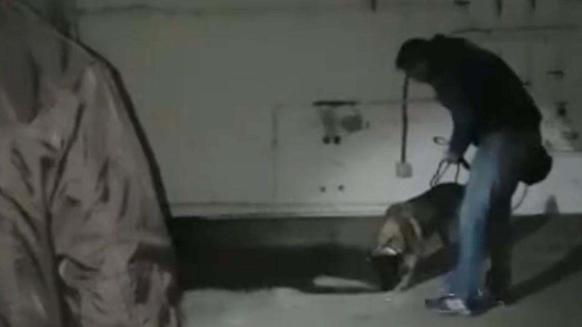 Elton, el perro que encontró el cadáver de Diana Quer, 'marcando' el pozo