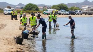 Tareas de recogida de peces muertos en el Mar Menor.