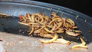 Ejemplares del gusano amarillo de la harina o 'Tenebrio molitor larva', salteados en una sartén.