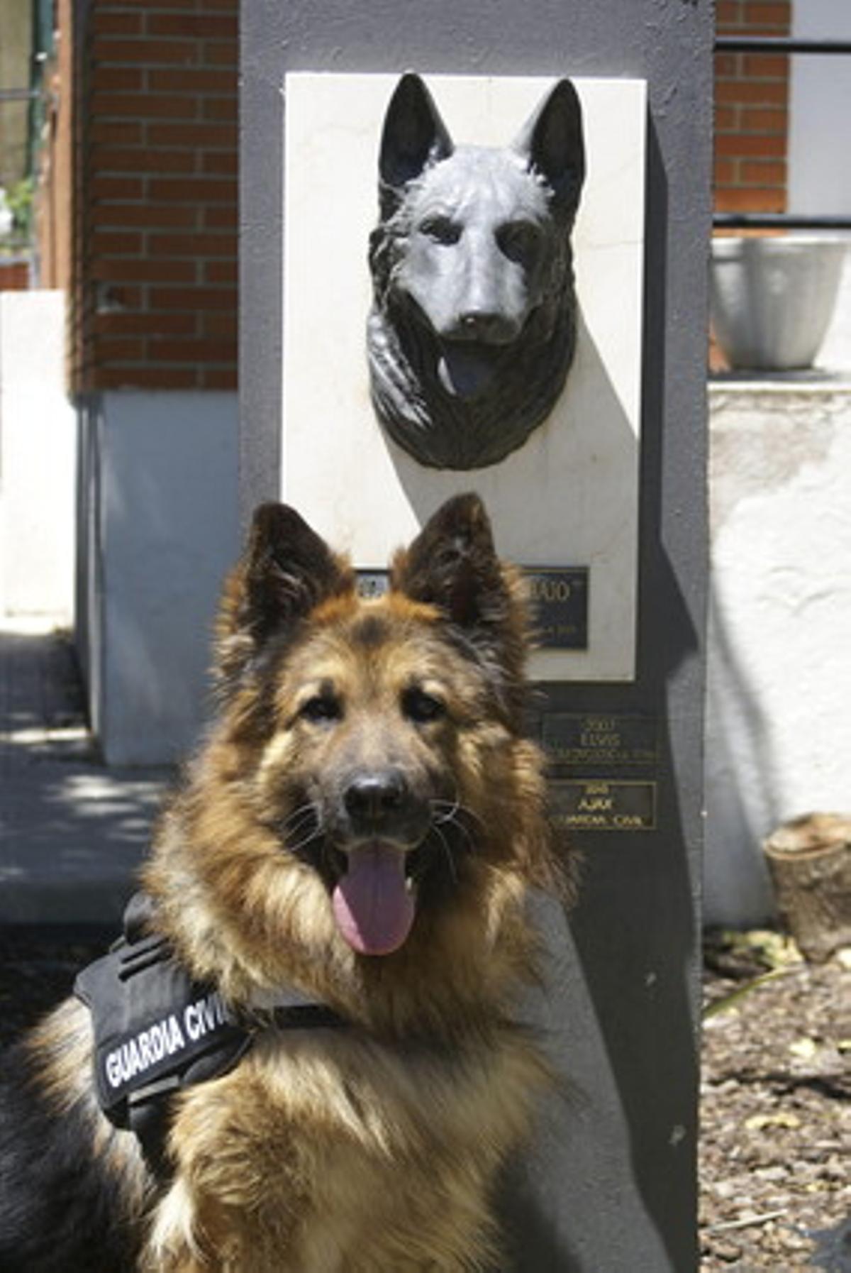 Ajax, el perro de la Guardia Civil reconocido por su valentía.