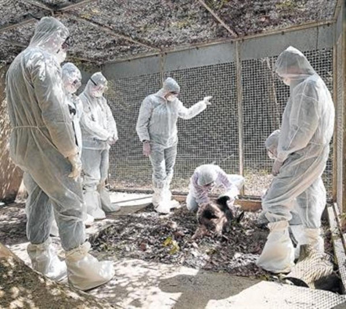 Curso de entomología forense organizado en Collserola por el Col·legi de Biòlegs y BCN Forensics.