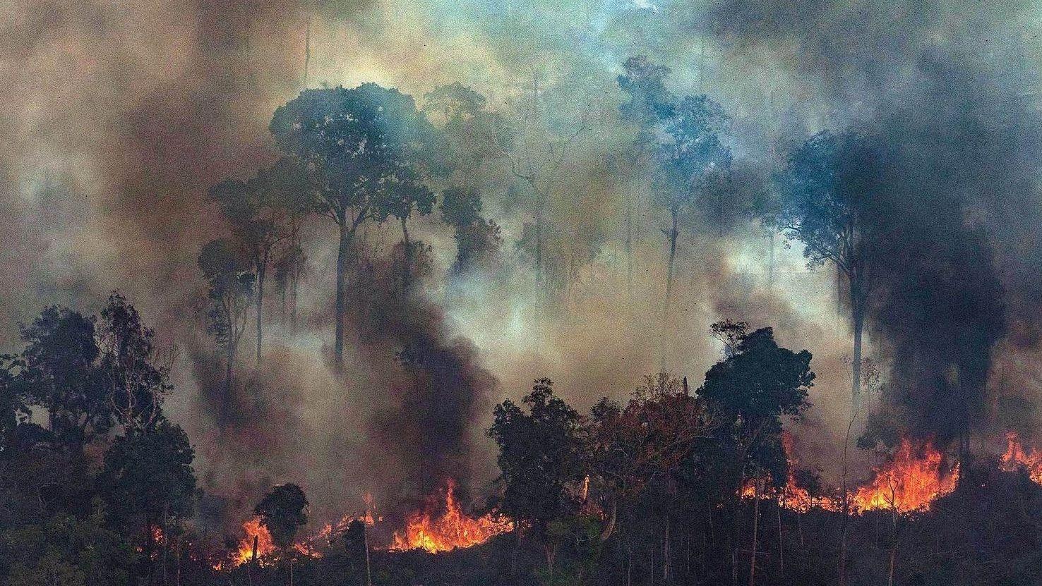 ¿Quién mata a los ecologistas?
