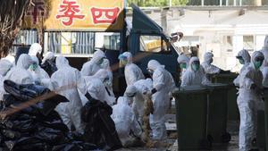 La Xina confirma un cas de grip aviària en un humà