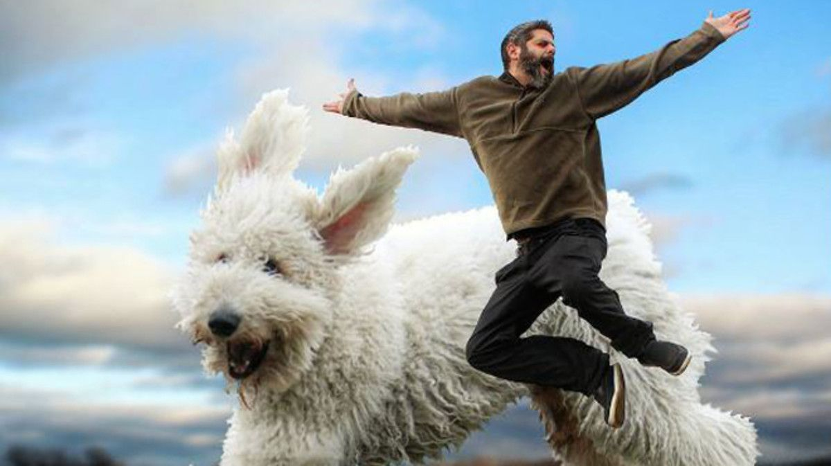 El perro gigante Juji y su dueño, Chris Cline, en un momento de ocio, en una imagen con Photoshop.