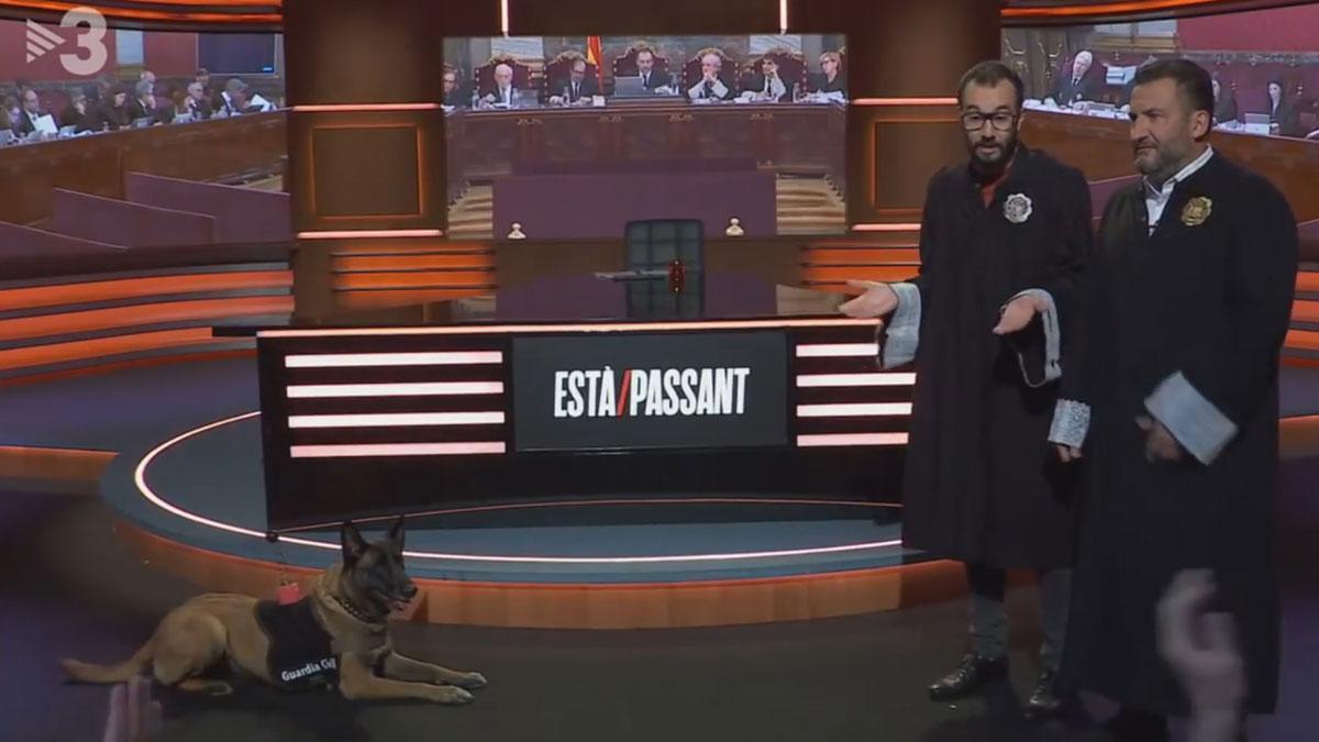 Toni Soler, vestido de juez, entrevista a un perro policía.