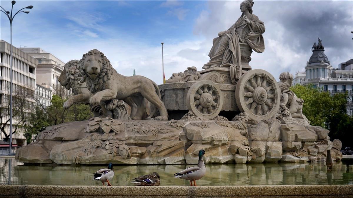 Patos en la madrileña fuente de la Cibeles, en pleno confinamiento.