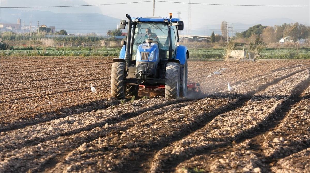 Un payés ara el campo en un terreno de El Prat.