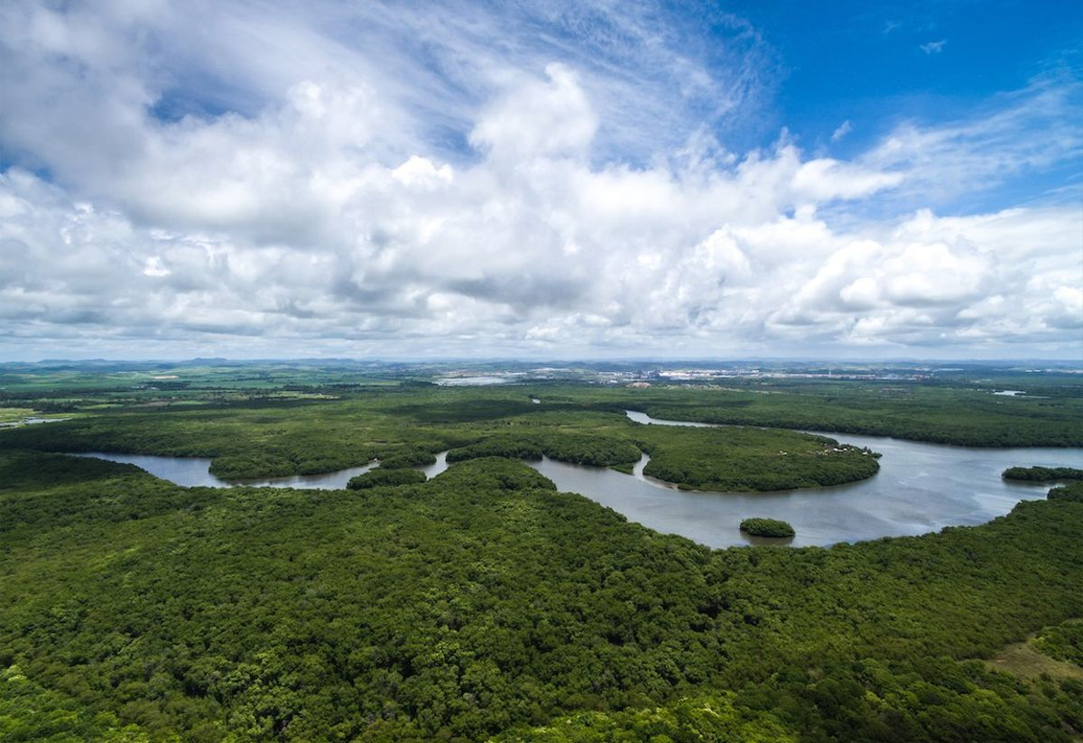 La selva amazónica, bañada por el río Amazonas, es uno de los pulmones del planeta.
