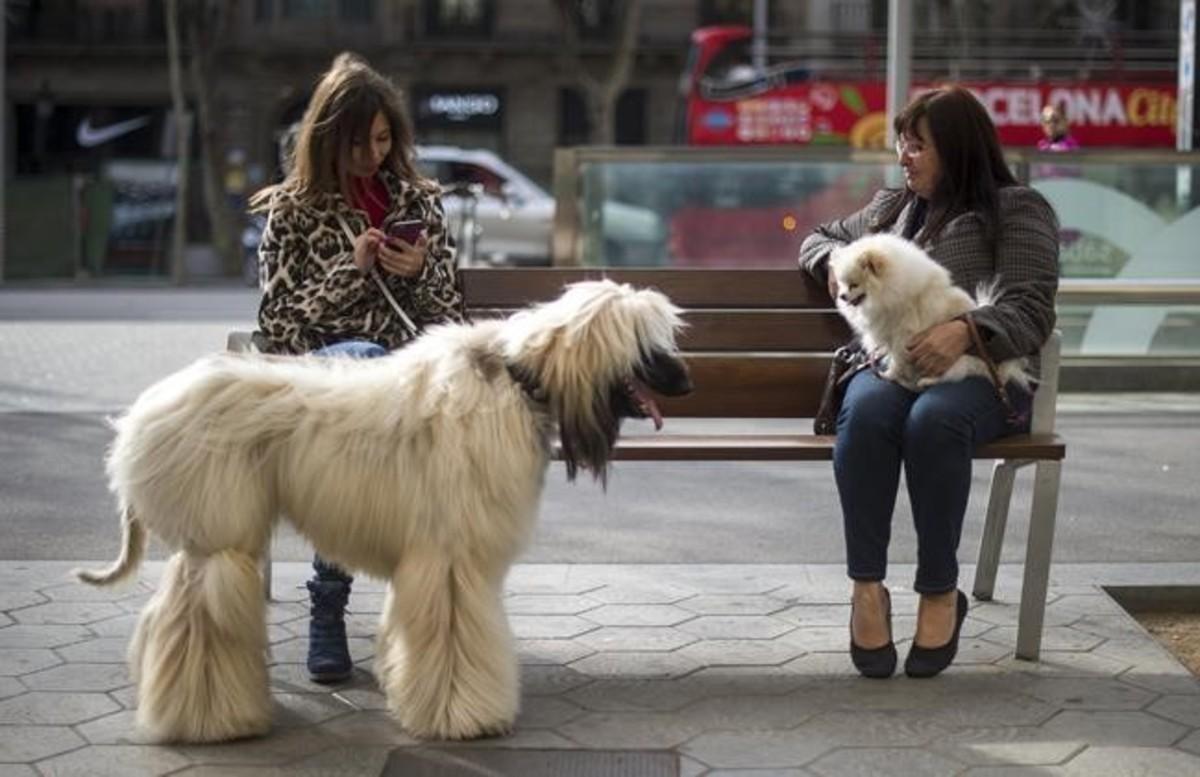Dos mujeres con sus perros, en el paseo de Gràcia, en una foto de archivo.