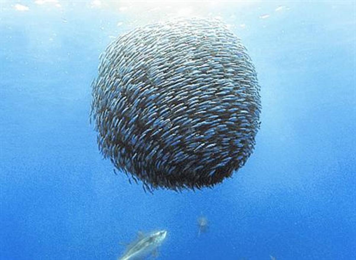 Banco de peces.