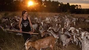 Judith Nadal pastura su su rebaño de cabras en Gaüses (Alt Empordà) de camino al establo.