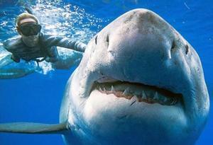 Los tiburones podrían convertirse en víctimas masivas colaterales del covid-19 por el uso del escualeno en las vacunas