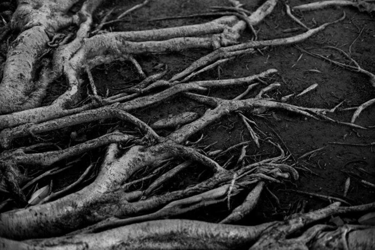 Plantas y tumores se expanden de la misma forma