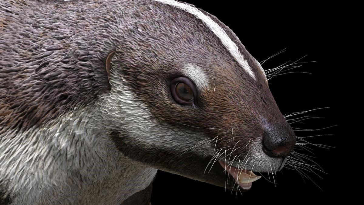 «Bèstia boja», el fòssil d'un estrany mamífer de 66 milions d'anys