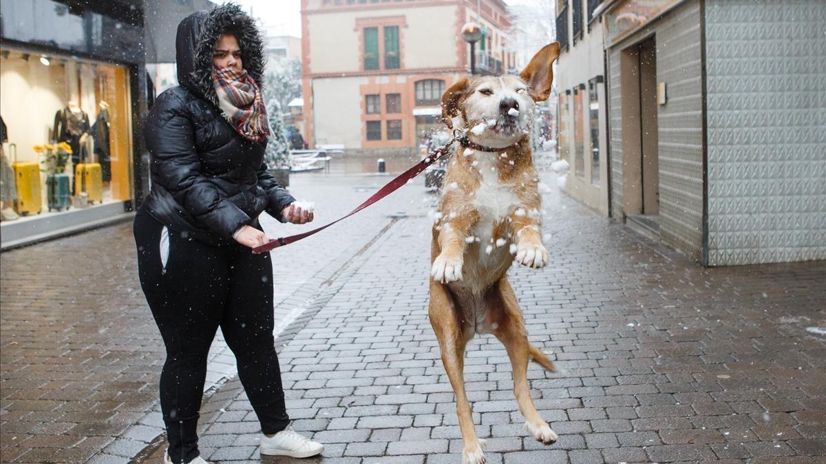 Un perro juega con los copos de nieve en el centro de Cardedeu.