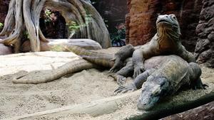 ¡Immaculada concepció al Zoo de Barcelona!