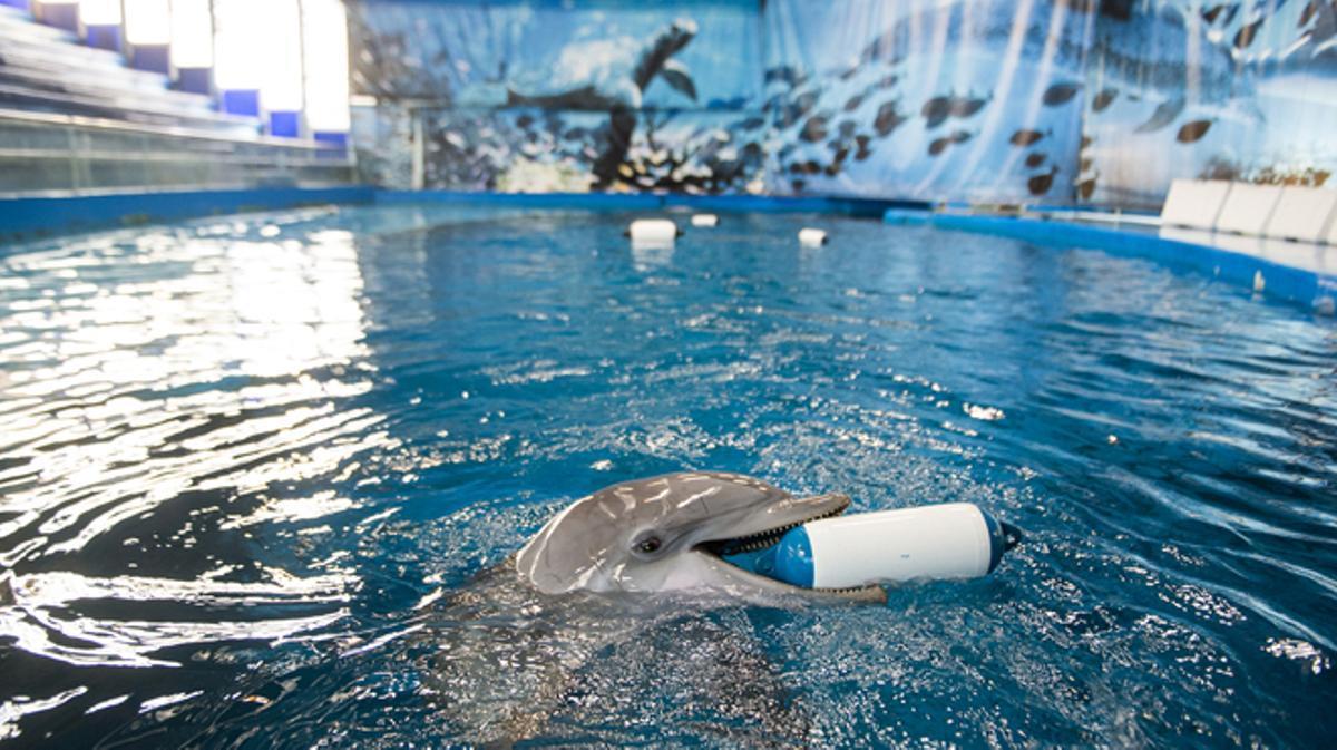 El delfinario del Zoo de Barcelona