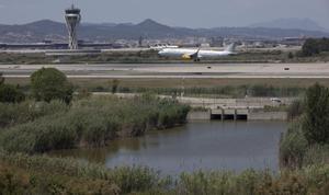 El aeropuerto del Prat limita con el espacio natural de La Ricarda