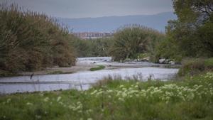 Barcelona 13/04/2021  Parque fluvial del Besòs      a la altura de Montcada i Reixac En la foto andarías chicoFoto de Ferran Nadeu