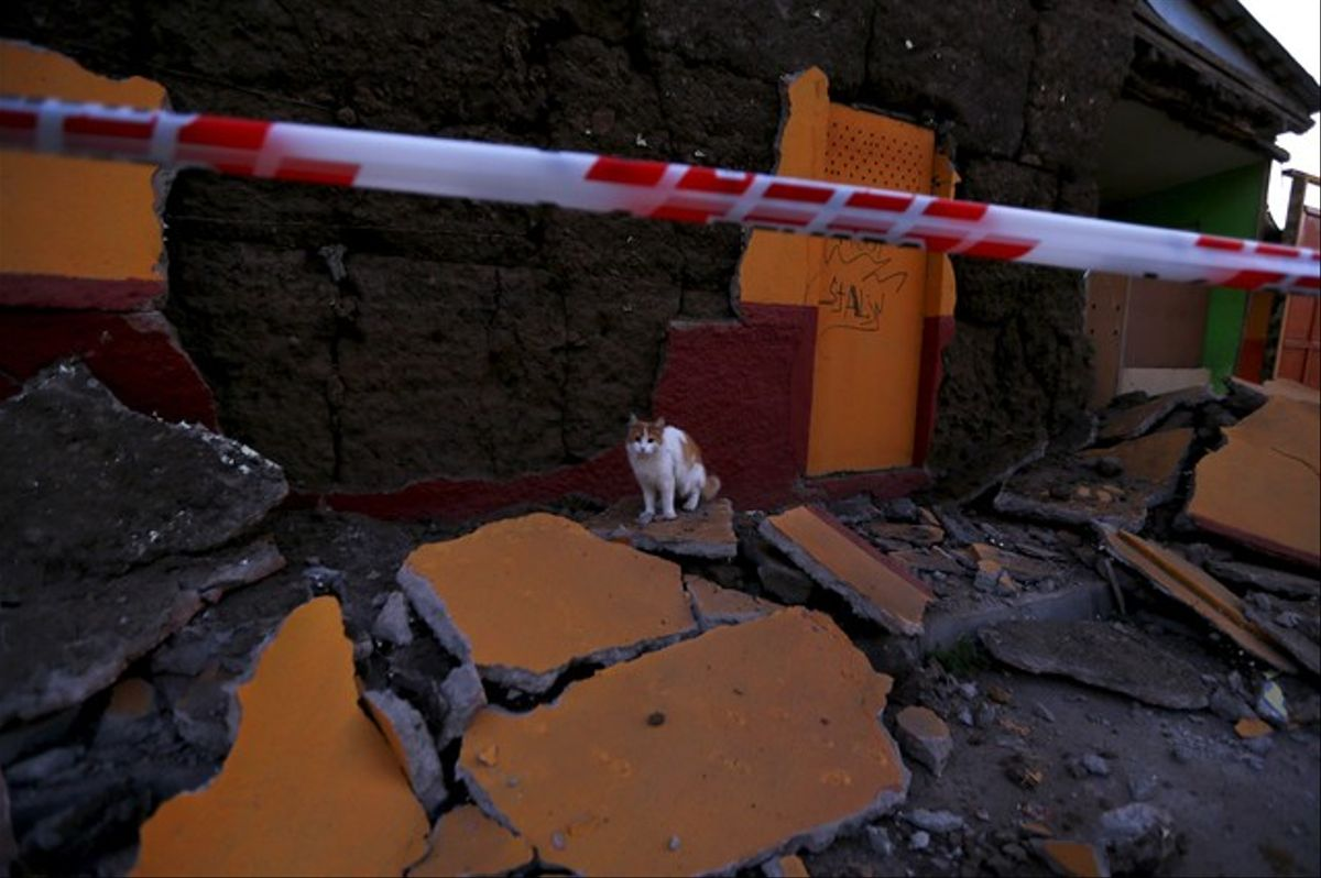 Un gato es fotografiado entre los escombros de un edificio derrumbado en la localidad de Illapel, la más afectada por el terremoto de Chile.