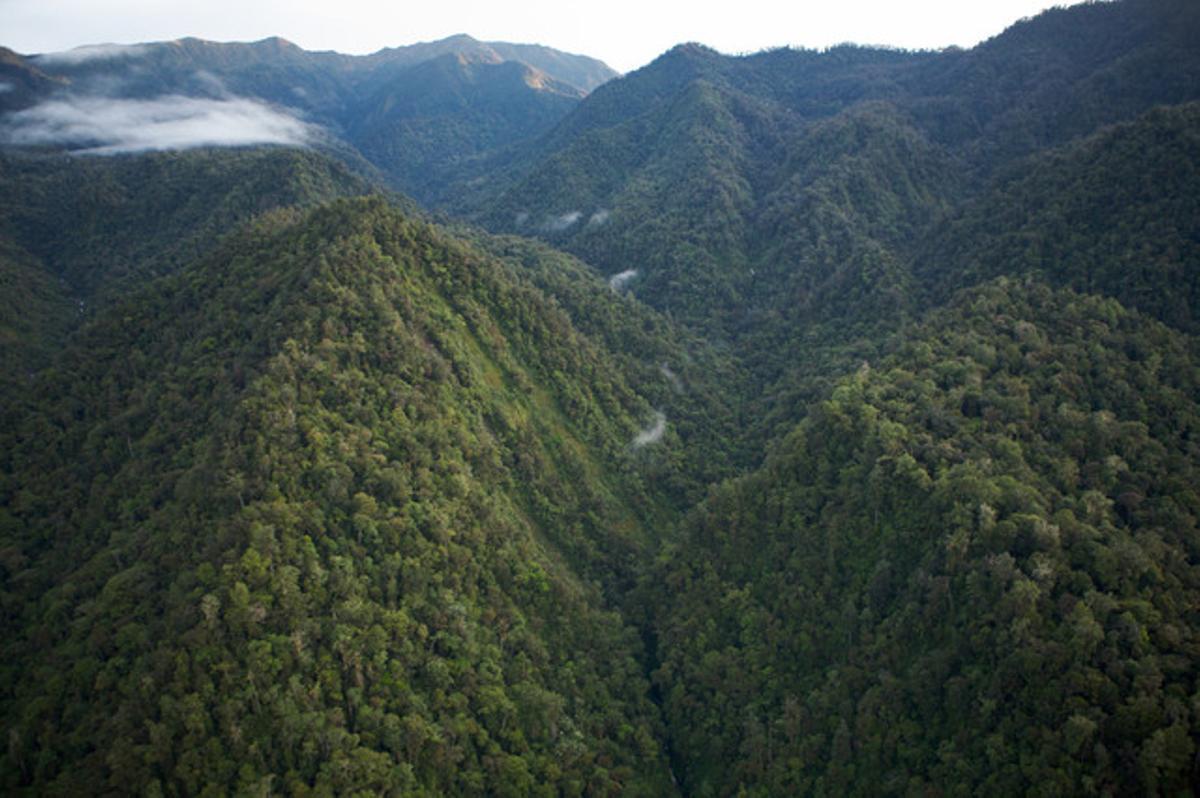 Vista aérea de una selva de Papúa Nueva Guinea.