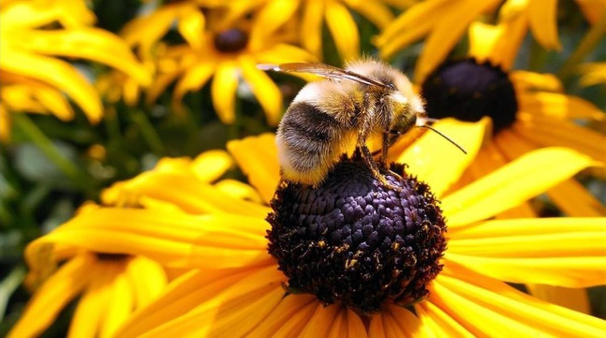 Una abeja polinizadora en una vistosa flor.