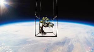 Shiki, el pino eternode Azuma Makoto, fotografiado en la estratosfera.
