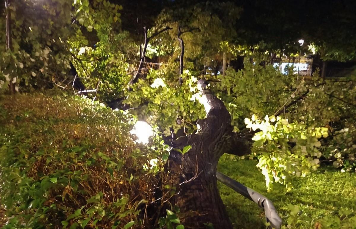 Árbol caído en el parque de Can Mulà de Mollet del Vallès.