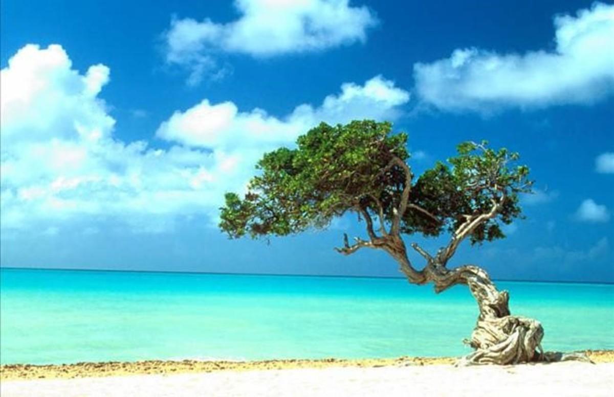 Una playa de la isla de Aruba.