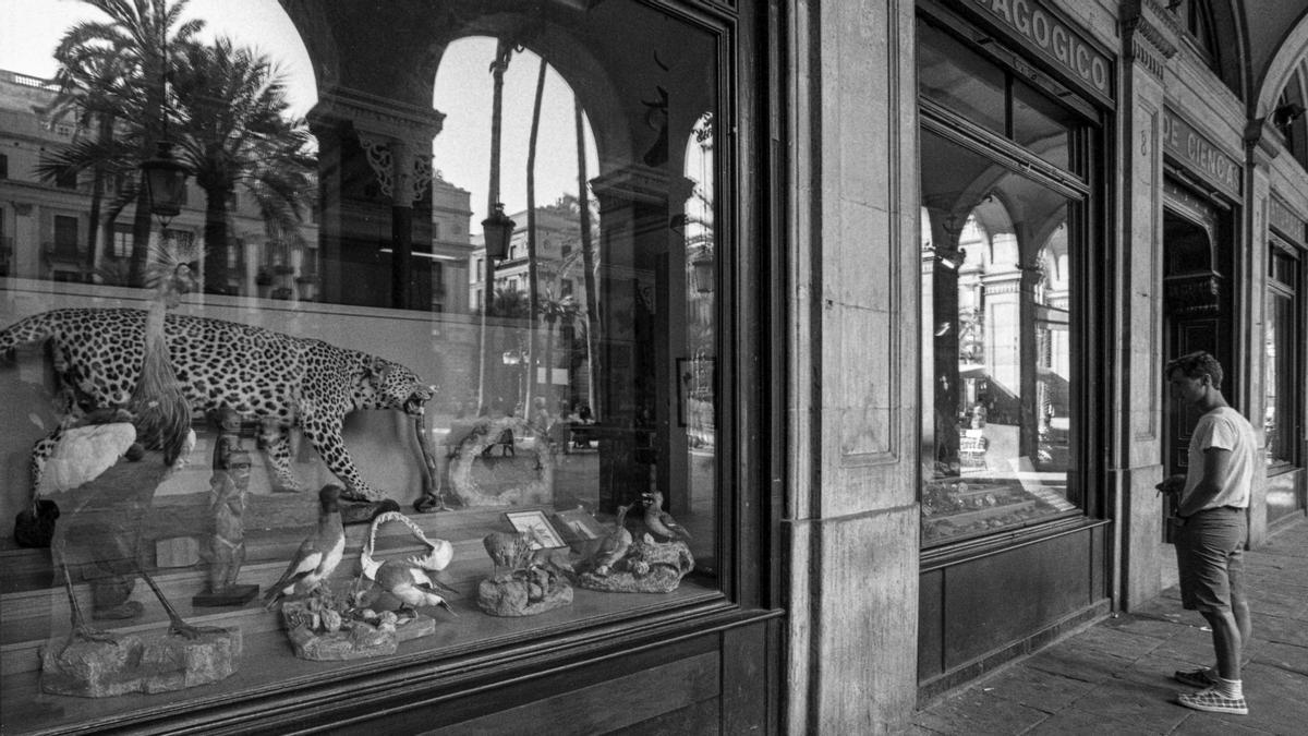 El escaparate de El Taxidermista, en 1987, con el reflejo de la plaza Reial, su segundo hogar.
