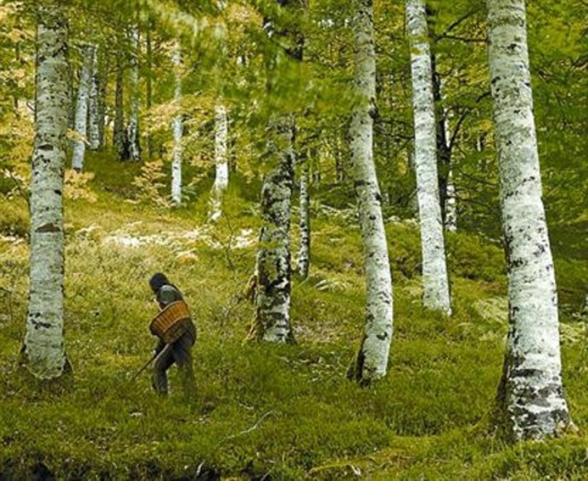 Un bosque del valle de Baztán.