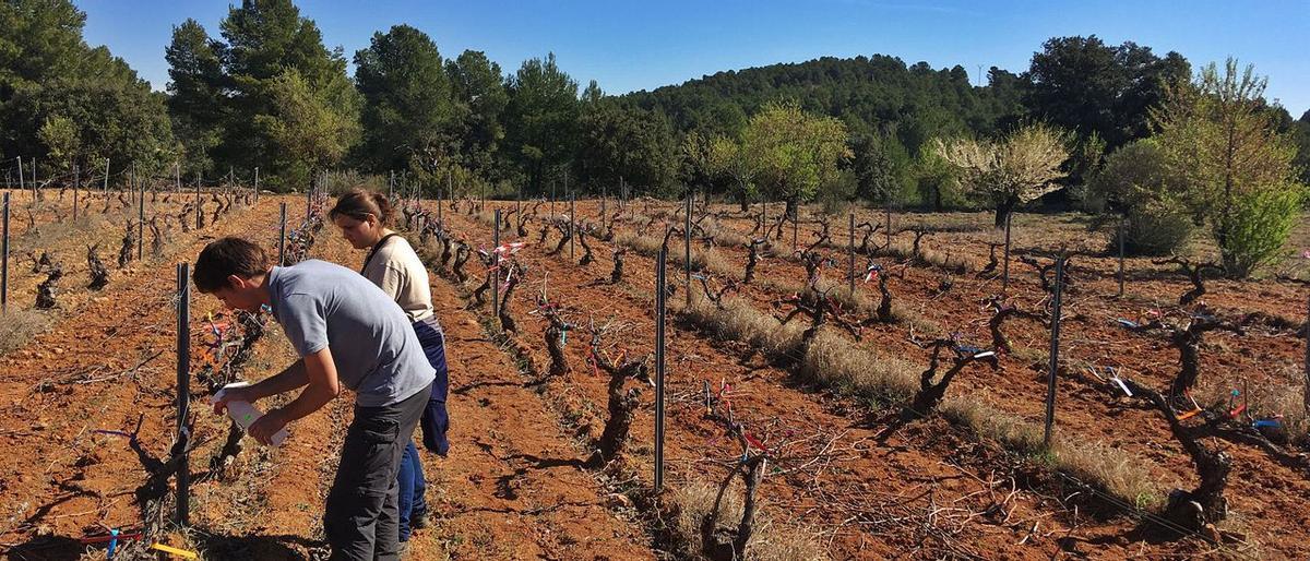 Técnicos de Aquactiva, en una explotación de viñedos de la provincia de Valencia.