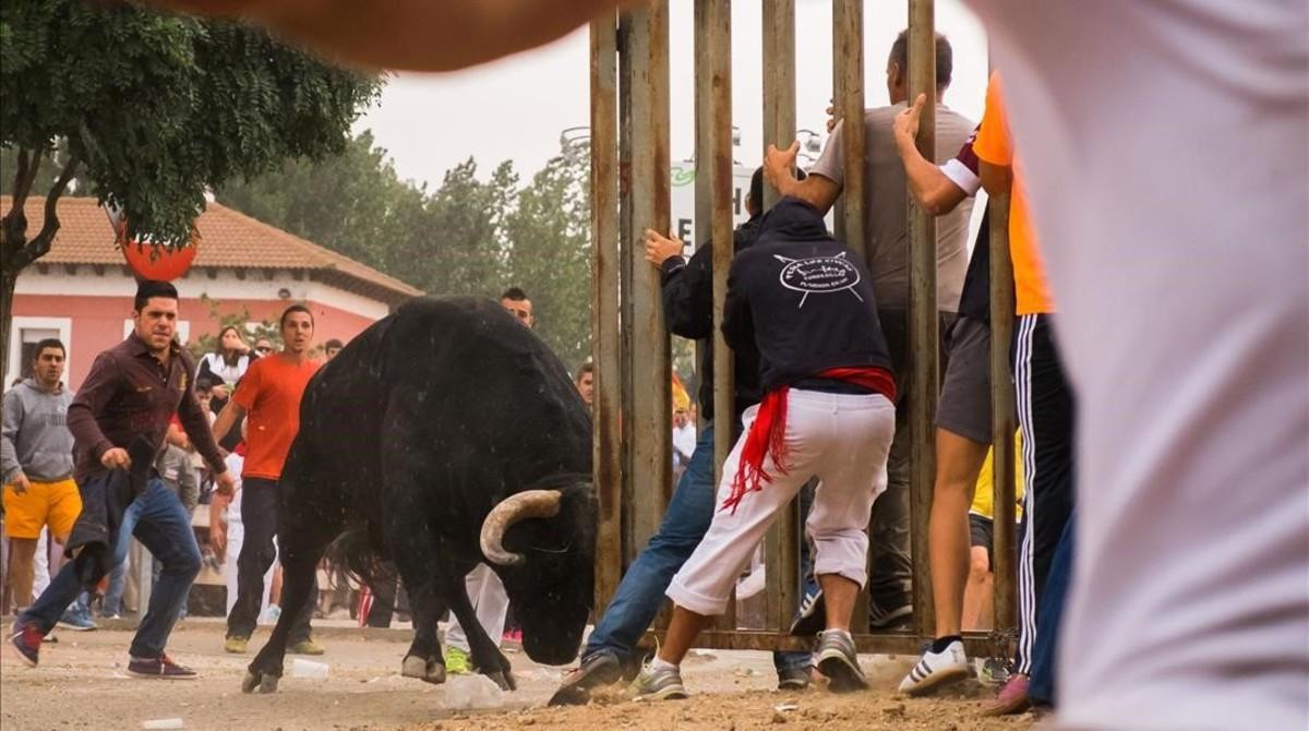 Toro de la Vega alternativo celebrado en Tordesillas