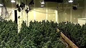Desmantelado un clan criminal de Sabadell que blanqueó más de tres millones de euros procedentes de la marihuana.