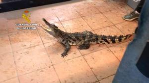 Intervenidos en Sant Vicenç de Montalt reptiles catalogados como especies protegidas.
