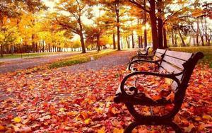 El otoño tiene un toque especial en la naturaleza.