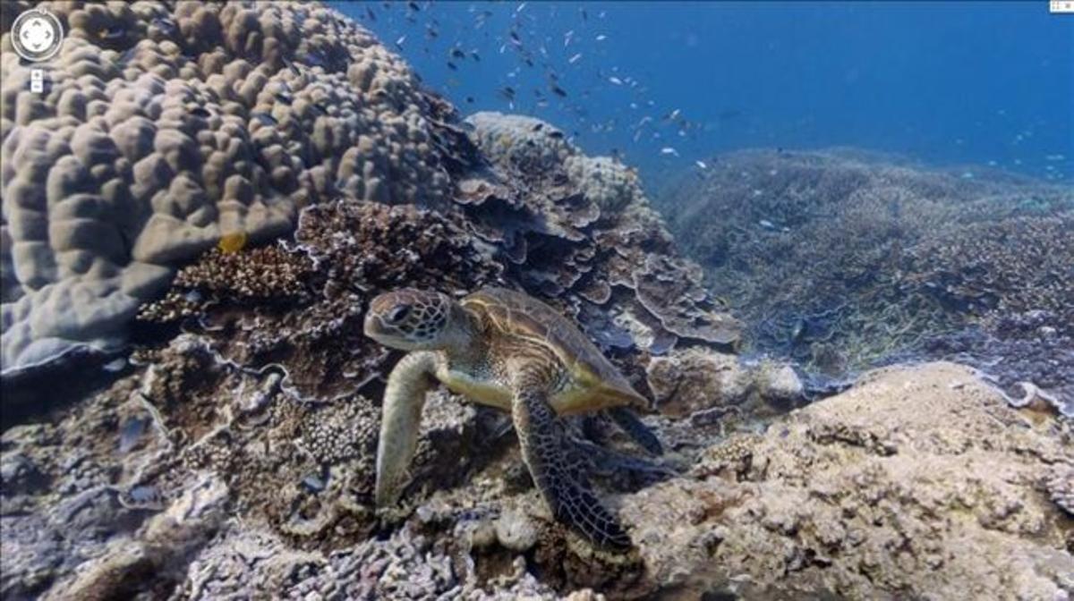 Google estrena Street View en el fondo marino.