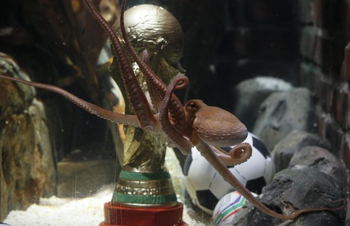El pulpo Paul nada frente a una réplica de la Copa del Mundo de fútbol, que ha recibido como premio a sus aciertos en el Mundial.